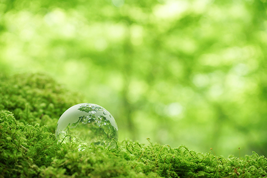 地球と森のイメージ画像